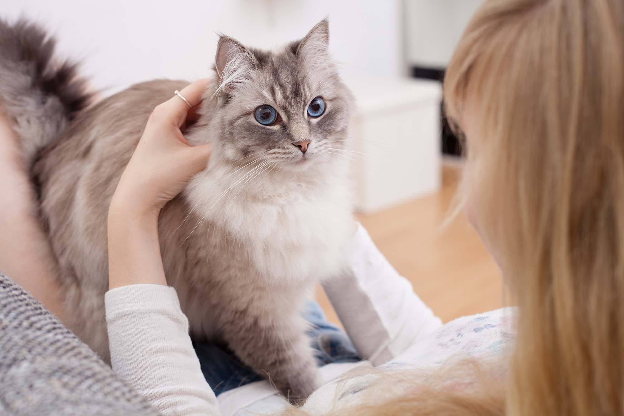 Services | Hillside Veterinary Clinic Newmarket ON
